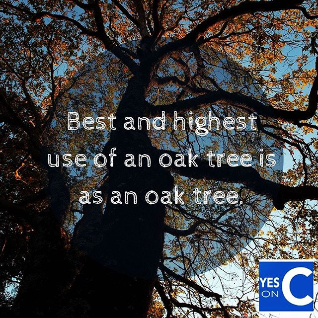 To protect our water and save trees, vote YES on C. #YesOnC #RightSideOfHistory #NapaCounty #protect #NapaValley #AgPreserve . . . . #AmericanCanyon #Napa #Yountville #StHelena #Calistoga #development #deforestation #forests #nature #protection #conservation #citizenrights #waterrights #freshwater #watershed #winecountry #citizenaction #wine #winelover #waterlover #vineyards #forests #winecountry