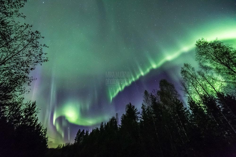 Aurora curtains.jpg