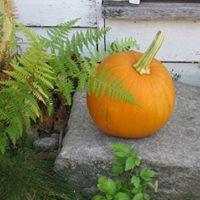 pumpkin on step.jpg