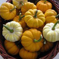 Little pumpkins.jpg