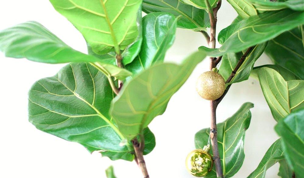 fiddle leaf fig christmas