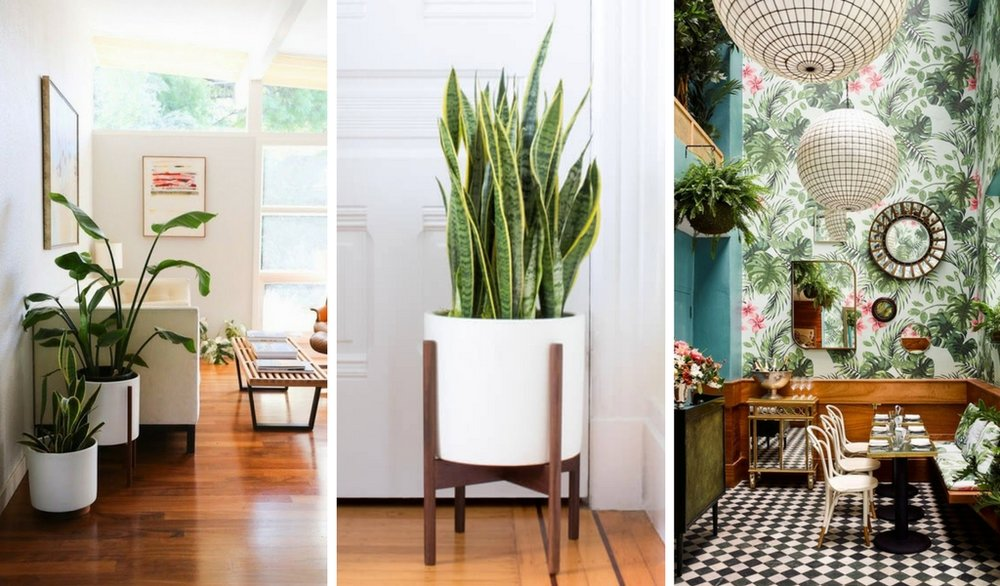 Left photo by  California Home Design , middle photo  Snake Plant  by Léon & George, right photo  Leo's Oyster Bar  in San Francisco, CA