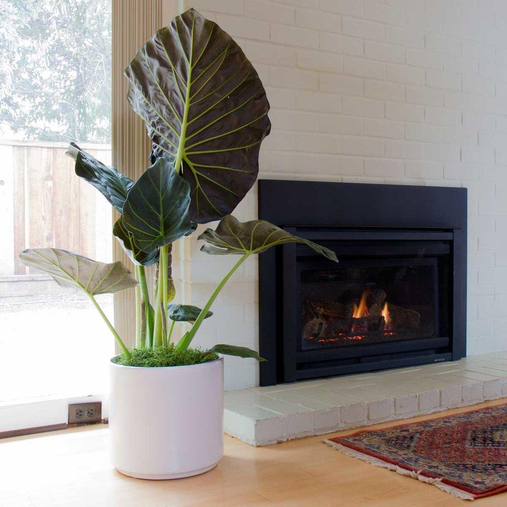 EE_fireplace.jpg