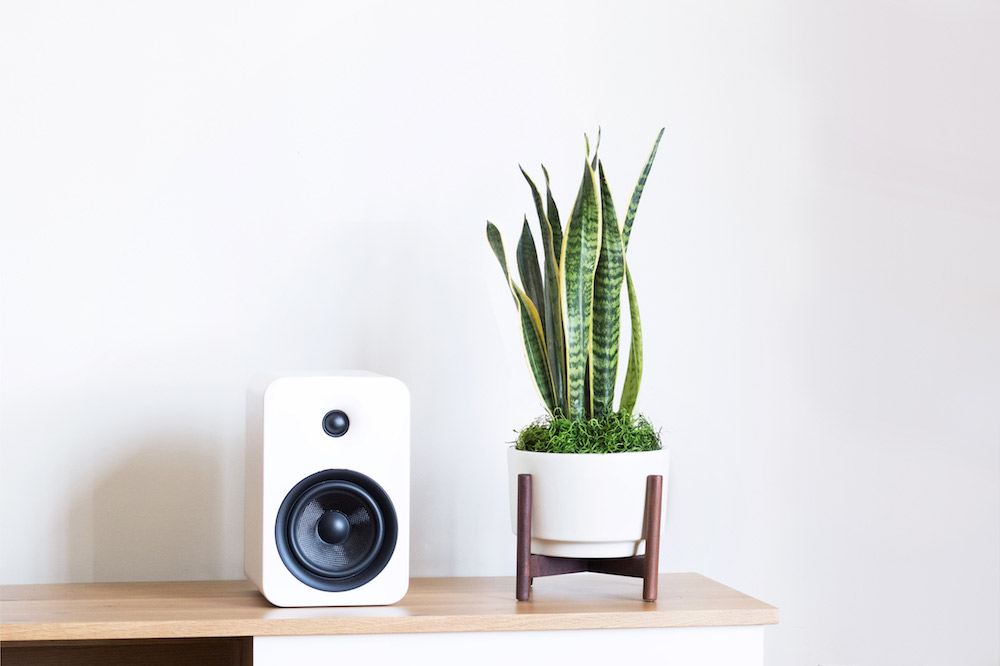 SNAKE PLANT - A large succulent and thus extremely adaptable and low maintenance, the perfect gift for the garden-challenged. It is also a terrific air purifier, making it a healthy and attractive addition to any indoor space.1 ½ft tall plant + ceramic pot + standDelivery in SF included