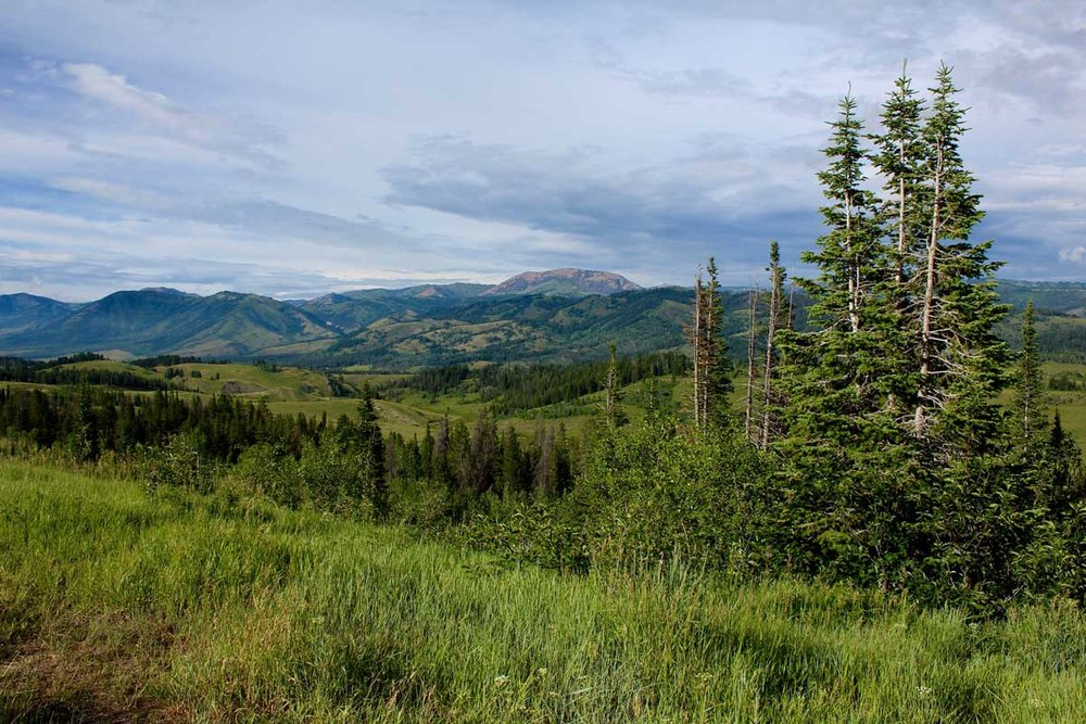 Bridger-Teton National Forest, Wyoming - photo by the National Forest Foundation