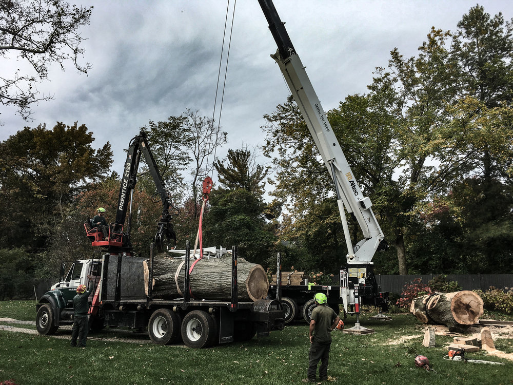 oak tree removal 1 (balt city)-1.jpg