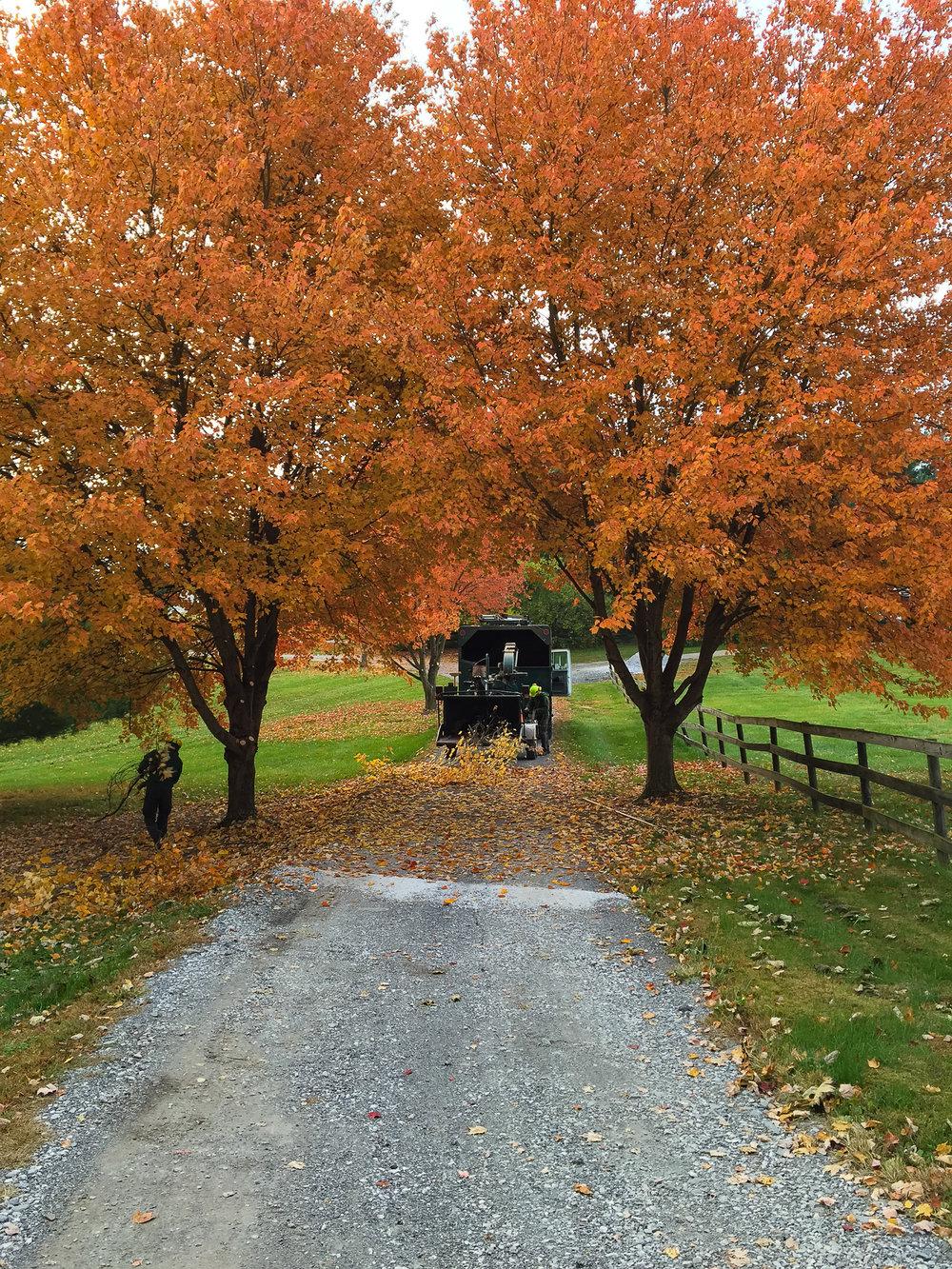 fall_edited-2.jpg