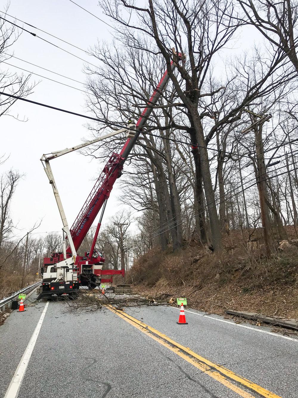 white oak bge emergency removal 1 (falls rd)-1.jpg