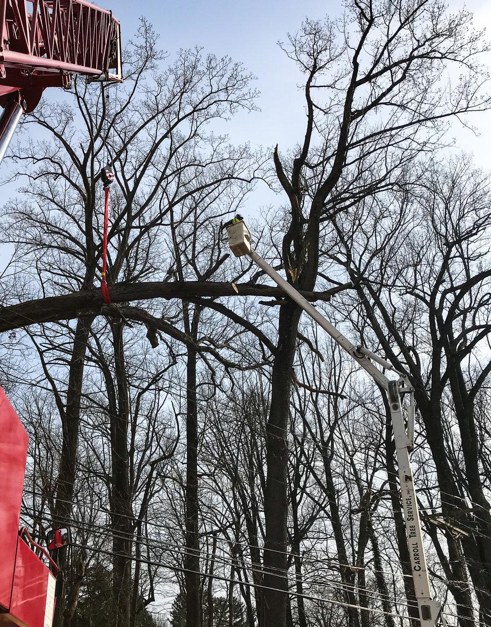 white oak bge emergency removal 2 (falls rd)-1.jpg