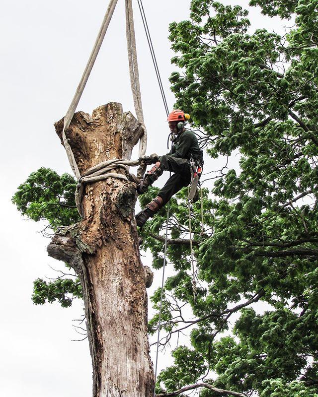 Flashback Friday! Have a great weekend! 😊 • • • • • #tgif #fbf #flashbackfriday #tree #trees #treeremoval #treecutting #treework #treeclimbing #treeclimber #treepruning #pruning #crane #craneremoval #chainsaw #arborist #arborists #arboristsofinstagram #baltimore #maryland #carrolltreeservice
