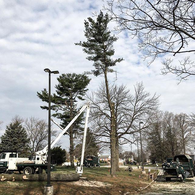 White Pine Tree Removals (March 2019) 📷: Dan • • • • • #tree #trees #treeremoval #treecutting #treework #treeclimbing #treeclimber #treepruning #pruning #crane #craneremoval #chainsaw #arborist #arboristsofinstagram #whitepine #pine #pinetrees #pinetree #spring #baltimore #maryland #carrolltreeservice