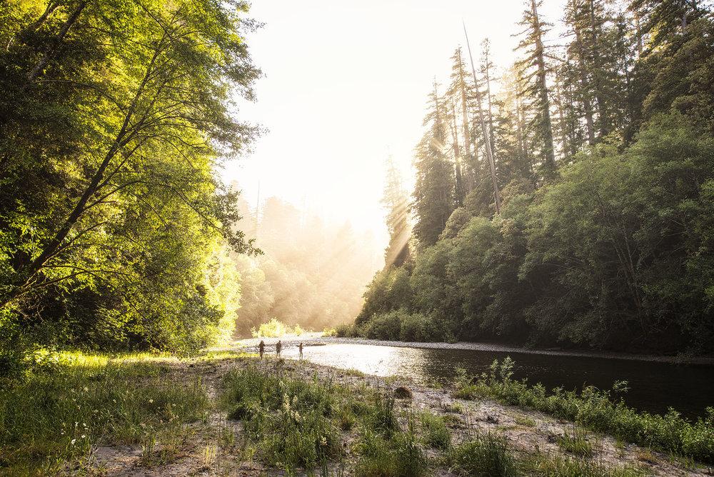 austin-trigg-redwood-water-bottle-california-sunset-tall-trees-grove-hiking-river-stream-camping.jpg