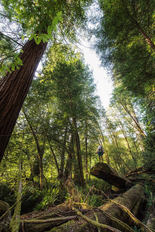 austin-trigg-redwood-water-bottle-california-tall-trees-grove-hiking-camping-adventure.jpg