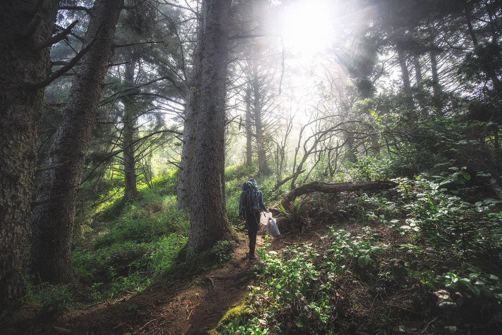 austin-trigg-redwood-water-bottle-california-morning-sunshine-adventure-forest.jpg
