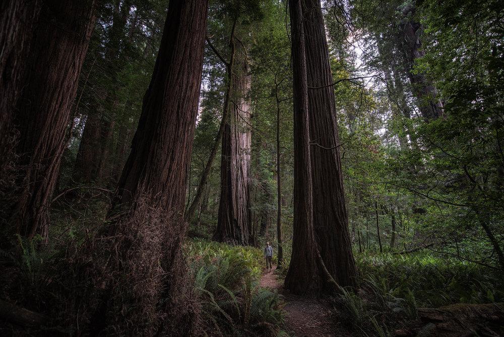 austin-trigg-redwood-water-bottle-tall-tree-grove-california-forest-plats-adventure.jpg