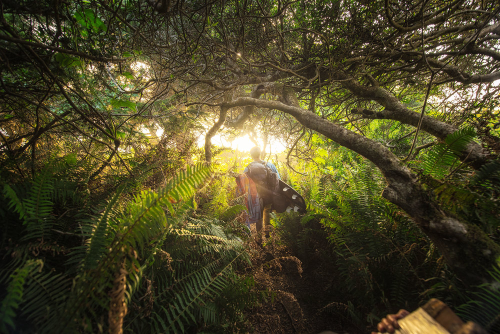 austin-trigg-redwood-water-bottle-beach-adventure-california-tree-forest-surfboard-camping.jpg