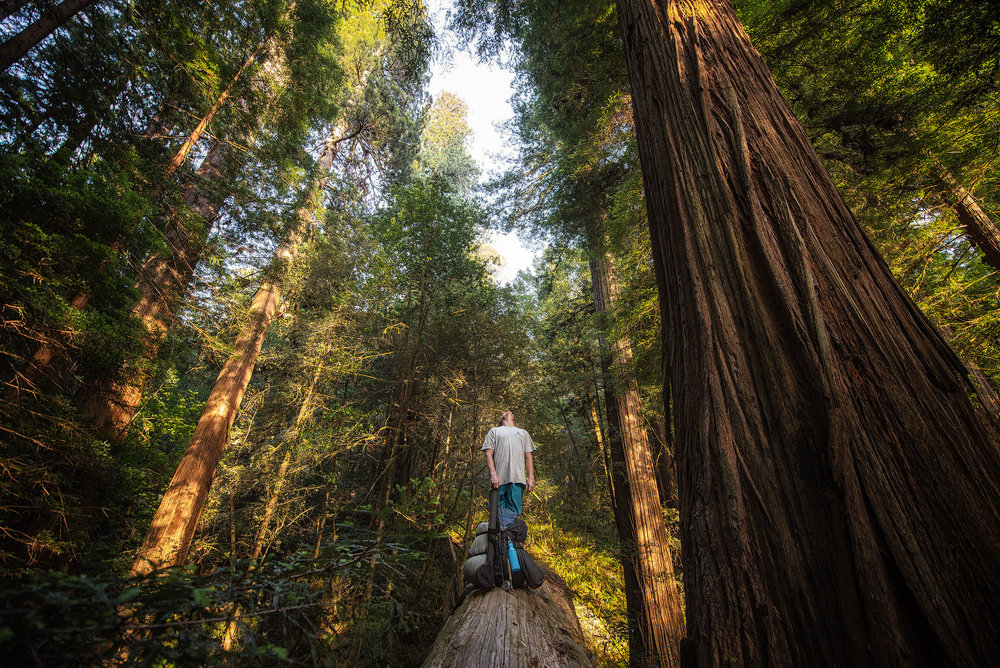 austin-trigg-redwood-water-bottle-california-backpacking-camping-tall-tree-grove-forest.jpg
