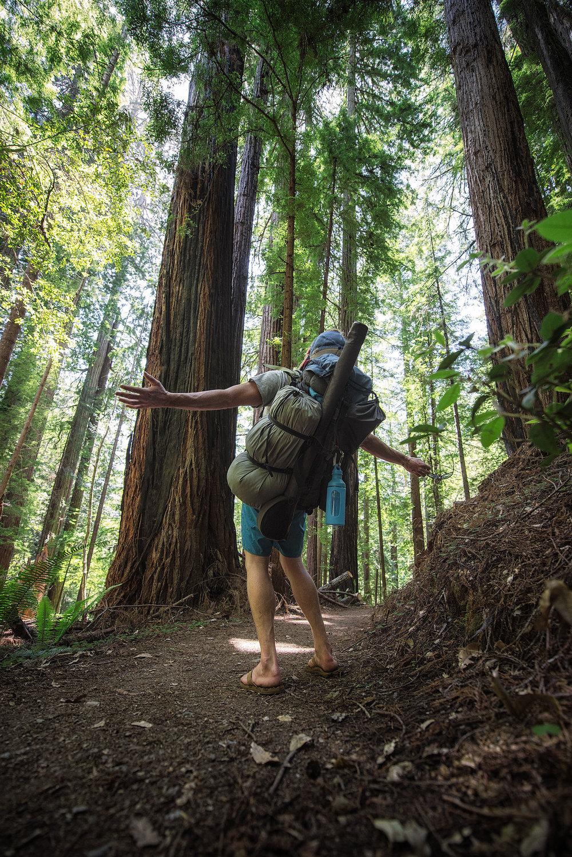 austin-trigg-redwood-water-bottle-Mizu-hiking-backpack-tall-tree-grove-california-adventure.jpg