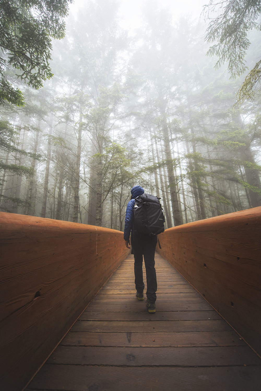 austin-trigg-redwood-national-state-park-LadyBird-Johnson-Grove-Bridge-fog-tall-trees.jpg