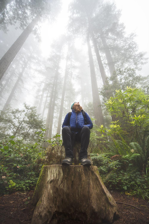 austin-trigg-redwood-national-state-park-Stump-lady-bird-johnson-grove-fog-tall-trees.jpg