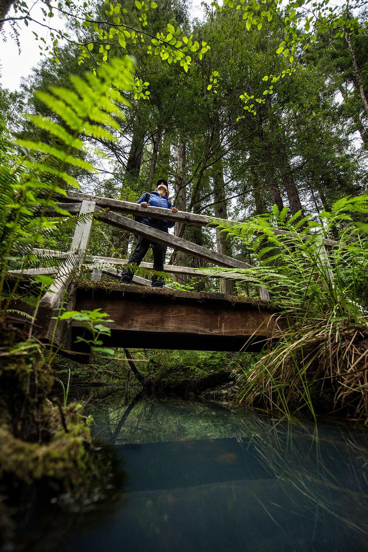 austin-trigg-redwood-national-state-park-stream-forest-Bridge-Crossing.jpg