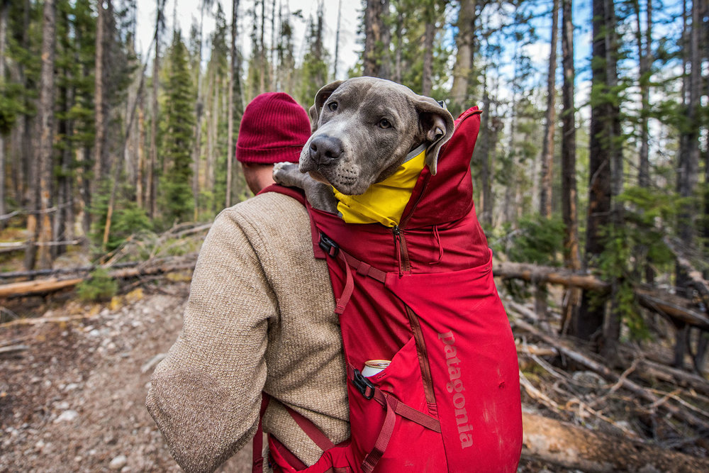 austin-trigg-patagonia-sawtooth-hiking-dog-backpack-advenure-wilderness-forest-idaho-outside-lifestyle-day-fall-weather-mountains-trees-sweater.jpg