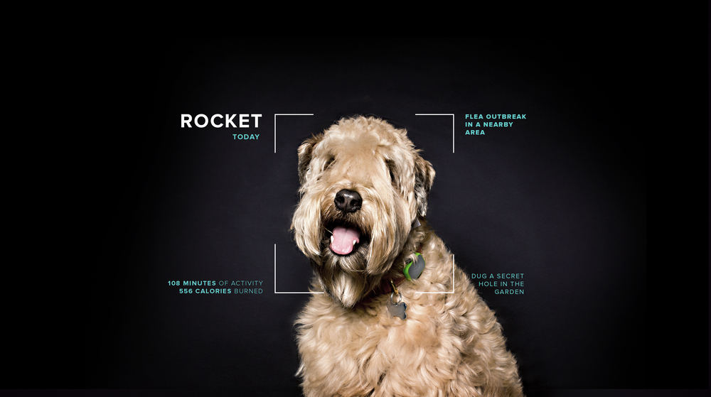 PetProfile_Rocket_v6.png