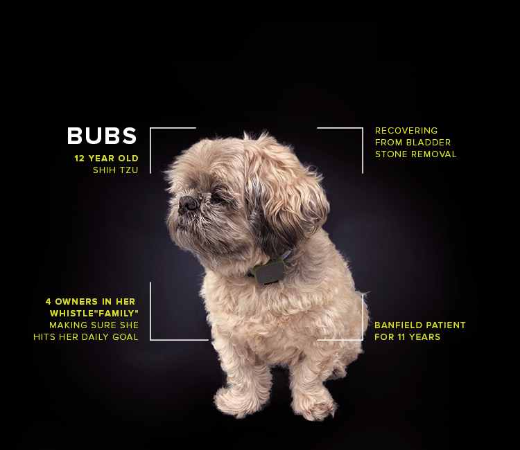 PetProfile_Full_750x650-Bubs.png