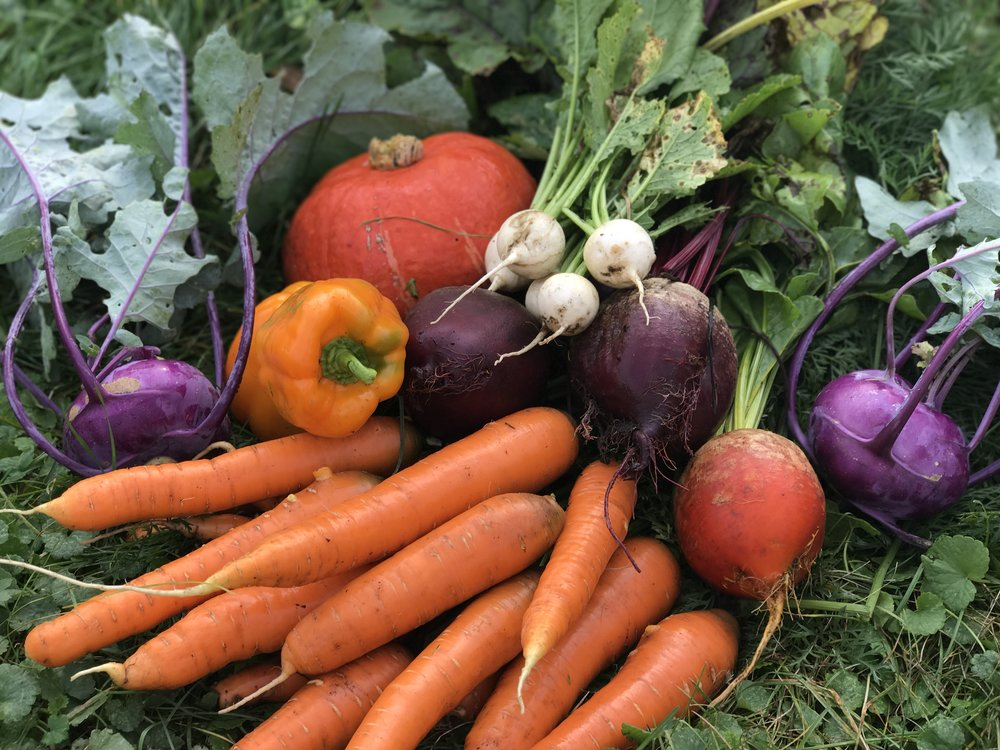- A well-timed sowing schedule rewards the gardener with a continuous harvest from the height of summer well into the frosty depths of autumn.