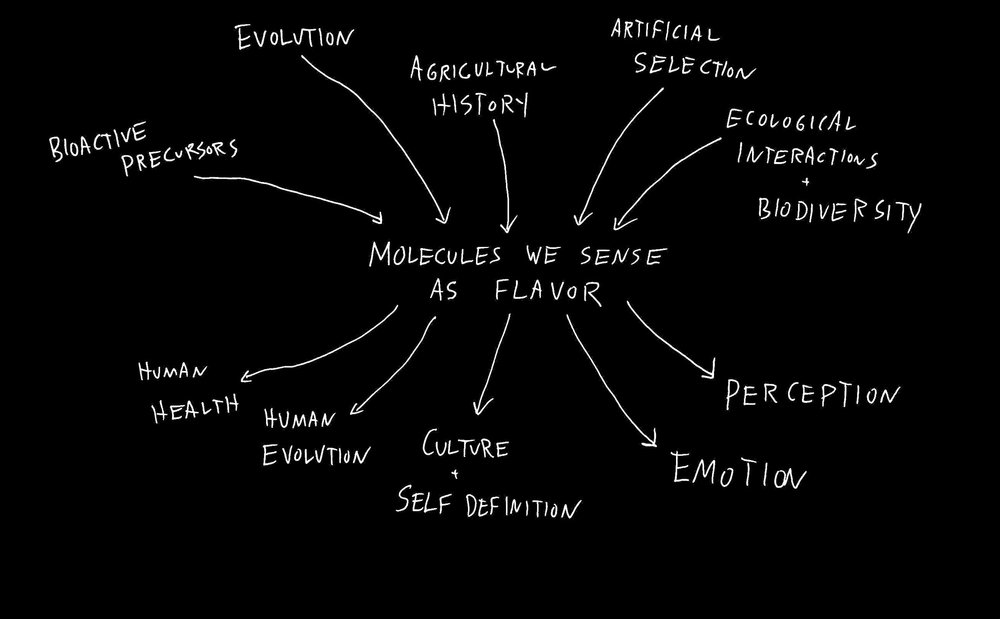 where do flavor molecules come from and what they do.jpeg