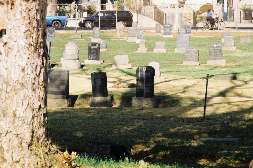 In the late afternoon sun, coyotes often sleep peacefully among the gravestones.