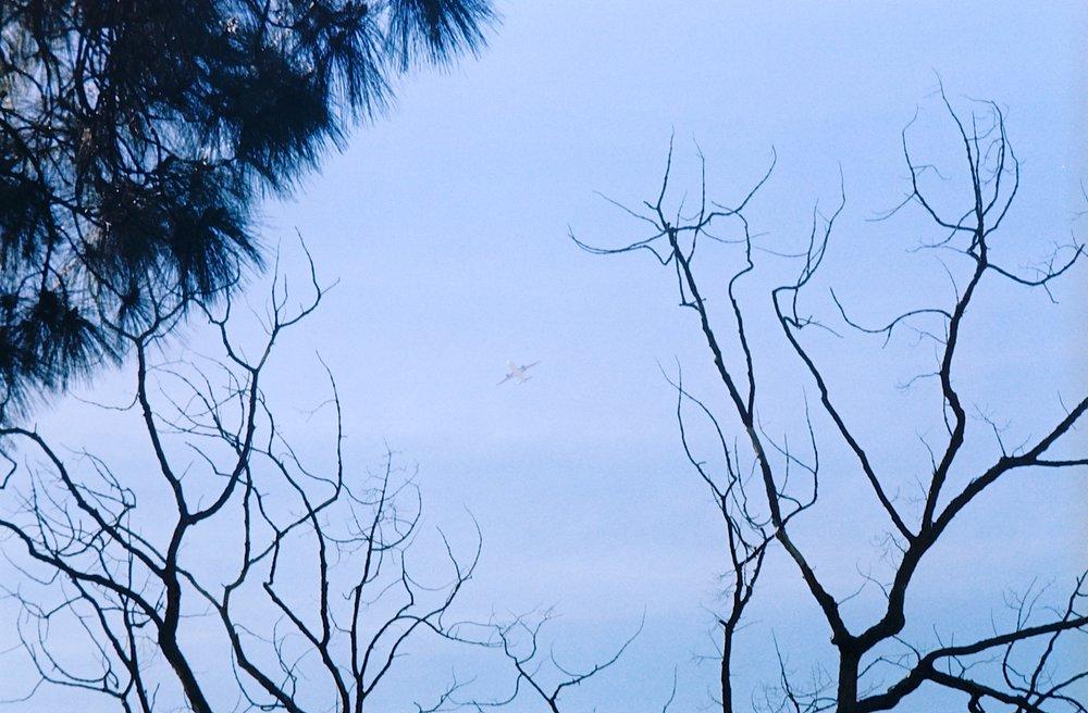 Plane in the Sky Over Evergreen.jpg