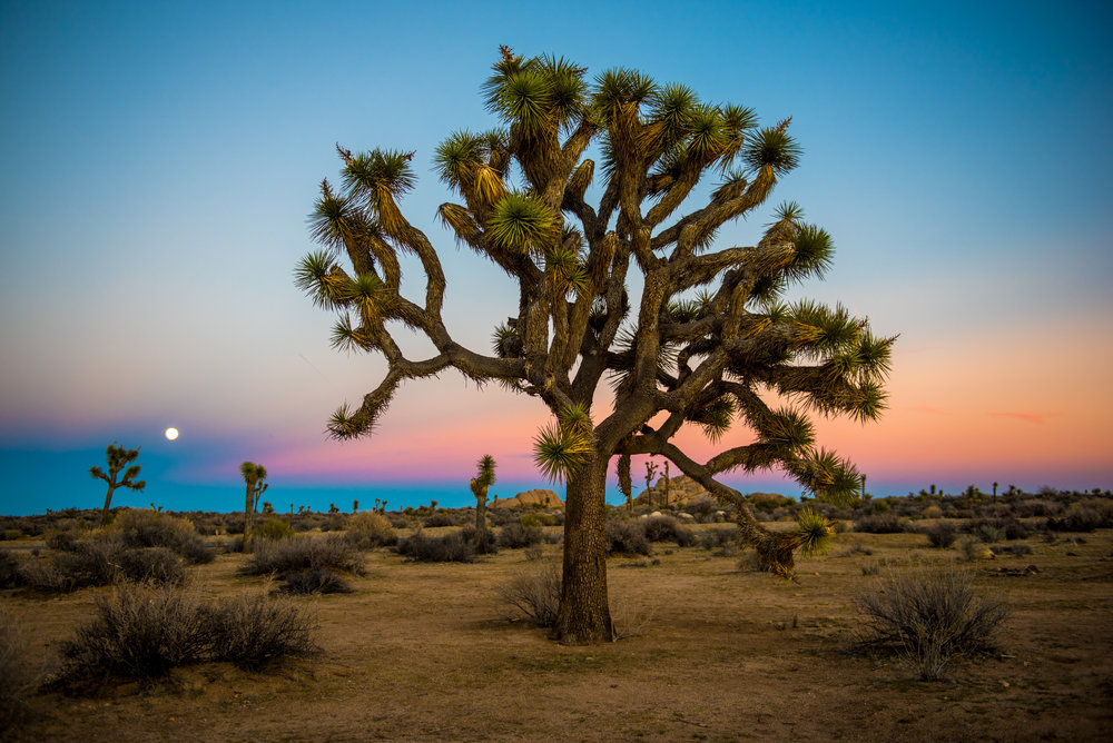 STEVEOSHOOTS PHOTOGRAPHY - U.S.A.