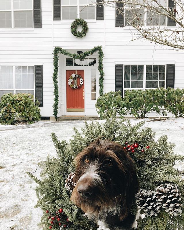 New siding and exterior paint, new roof, and a few lights... just in time for a white Christmas... blog post coming soon! Wishing you and yours a magical holiday season ❤️❄️ #blog #blogger# remodel #whitechristmas #dog #dogsofinstagram #exterior #wreath #elsathedrahthaar #drahthaar #farmhousestyle #farmhouse #modernfarmhouse #reddoor #whitehouse #blackshutters