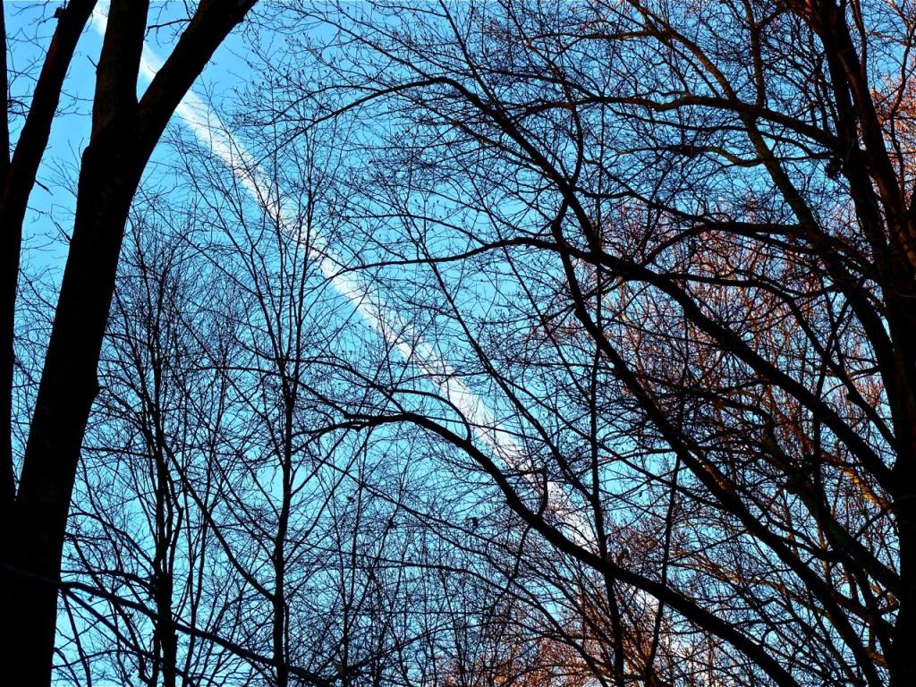 January morning sky.