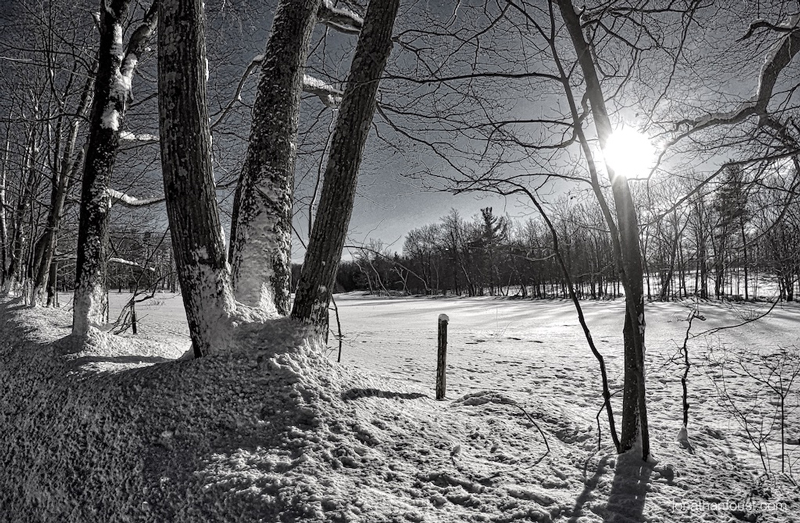 WindBlastedTrees