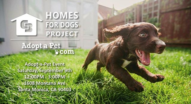 Looking for a new furry friend to add to your family?! Join us this Saturday, September 9th for our first annual Adopt-a-Pet Event at our office on Montana Ave. Contact us for more details! Todd@NOWHomes.com
