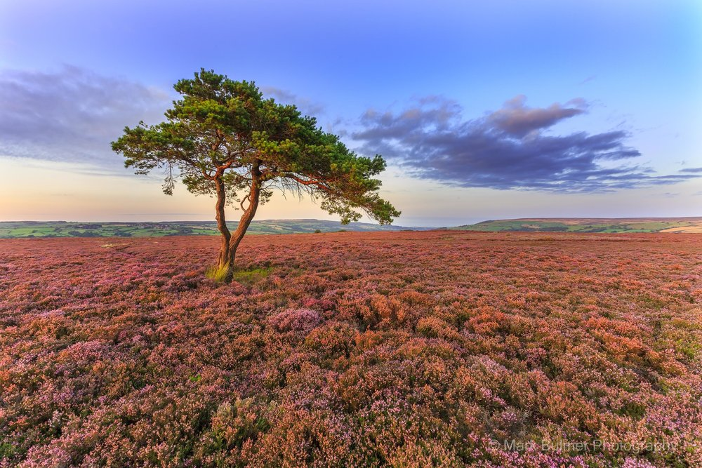 North York Moors (25 of 47).jpg