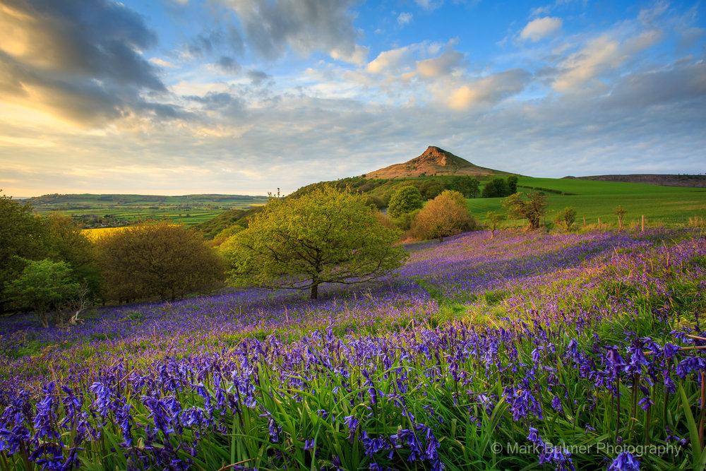 Bluebells And Rosberry Topping