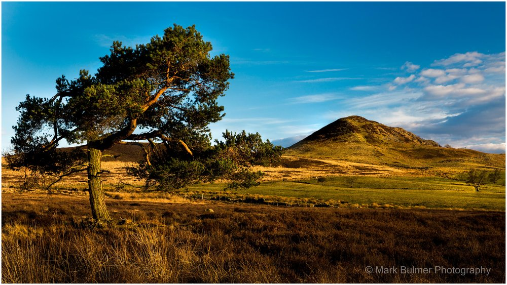 hawnby scots pine and hill (1 of 1).jpg