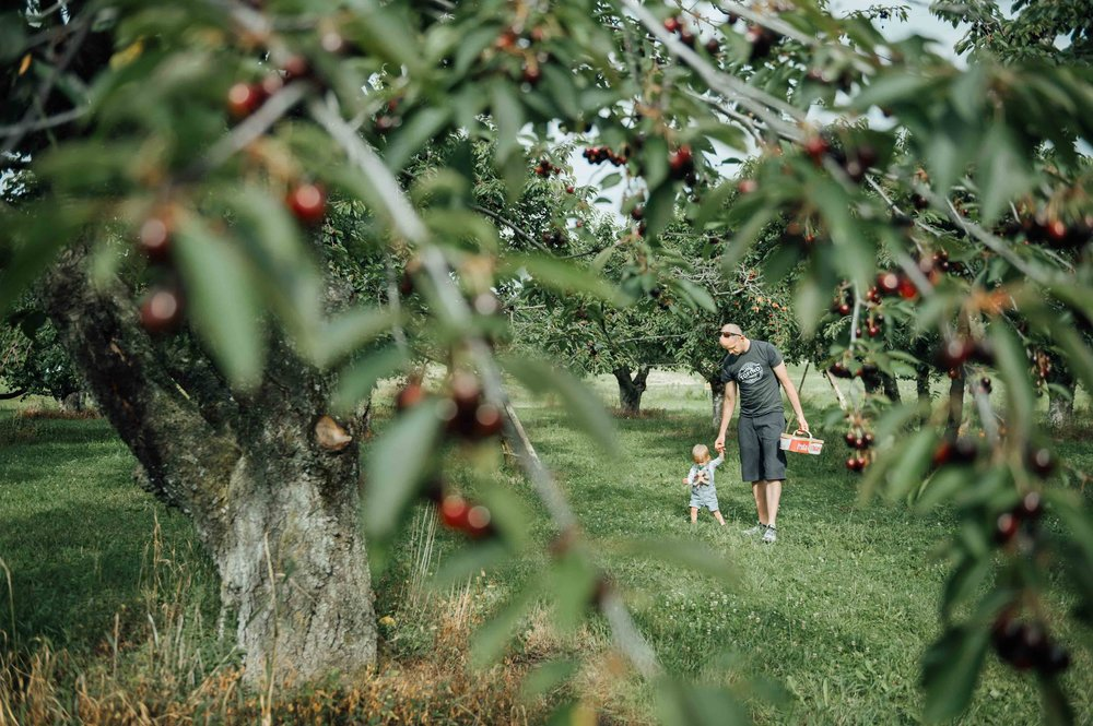 boy and dad walking in orchard - Niagara family photographer
