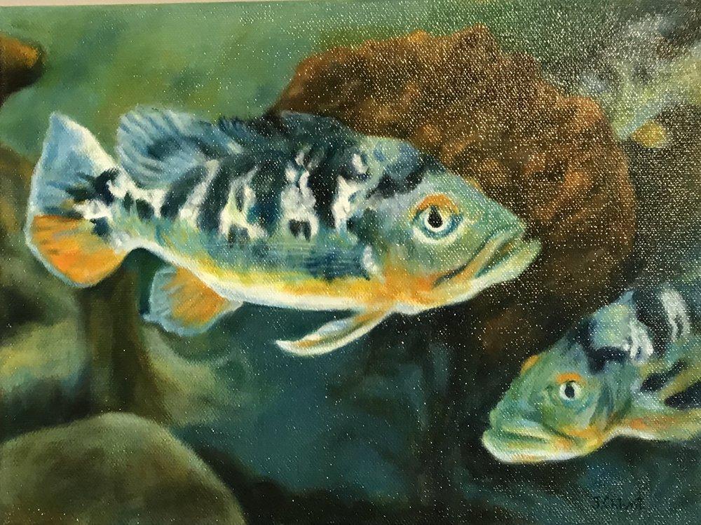 Parrotfish  0.8 x 1, acrylic on canvas, unframed