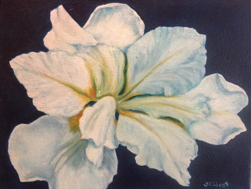 White Iris  Oil
