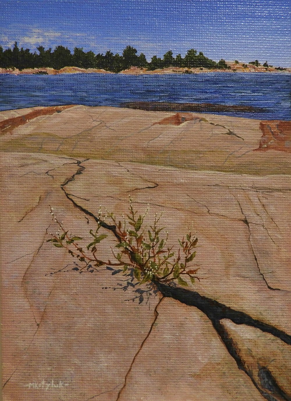 "5""x7"", Shrub at Killarney, acrylic on canvas, framed"