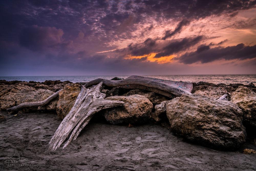The log on the beach
