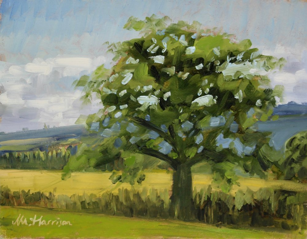 'Wise Old Tree' (oil on canvas board, 8x10 inches)   I painted this picture  alla prima  and  en plein air  in Aberdeenshire on a lovely afternoon in July.  It is one of my favourites and will remain in my private collection.