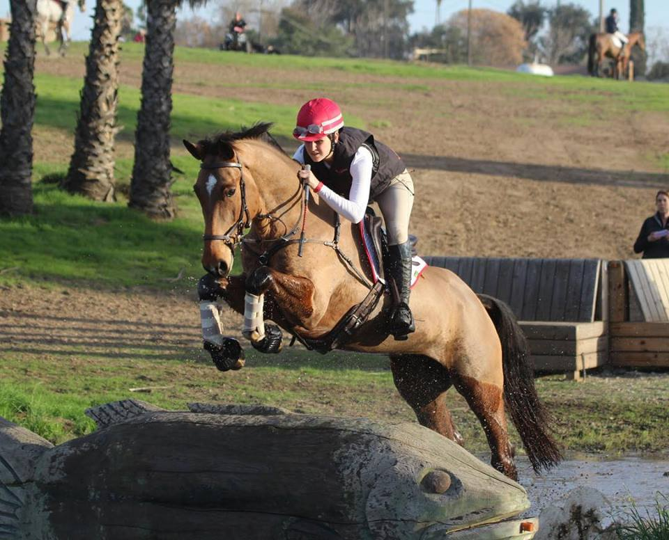 Charlotte Babbitt and 2AM, 2012 KWPN gelding