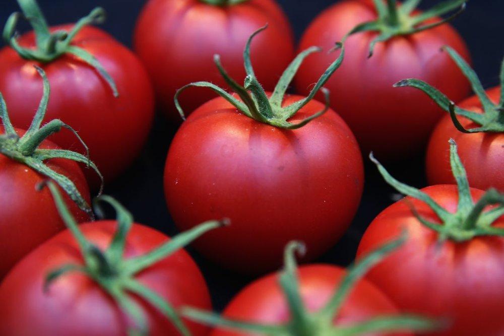 tomatoes-protect.jpg