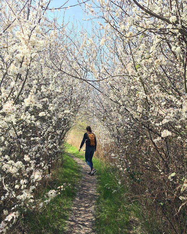 What a wonderful time of year enjoying the sunshine and brilliant blossoms! #minsmere #suffolk #easter