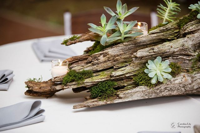 These stunning centerpieces were created by the wonderful crew at The Acreage Events in Plymouth, NC! . . . . . #carolinalilyphotography #weddingdecor #southernwedding #succulentlove